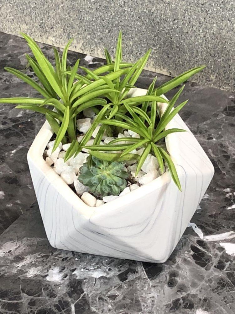 Small Succulent Dish Garden